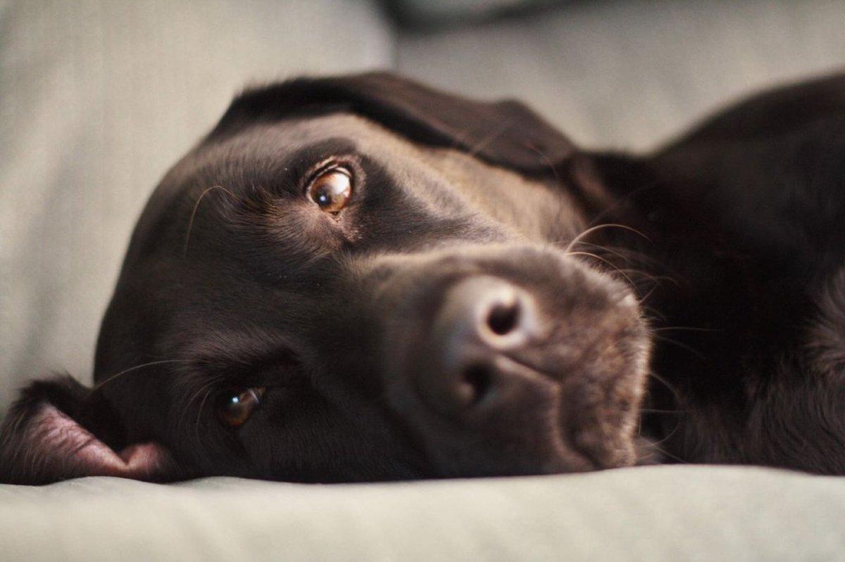 10 Natural Ways To Minimize Dog Shedding Organic Authority