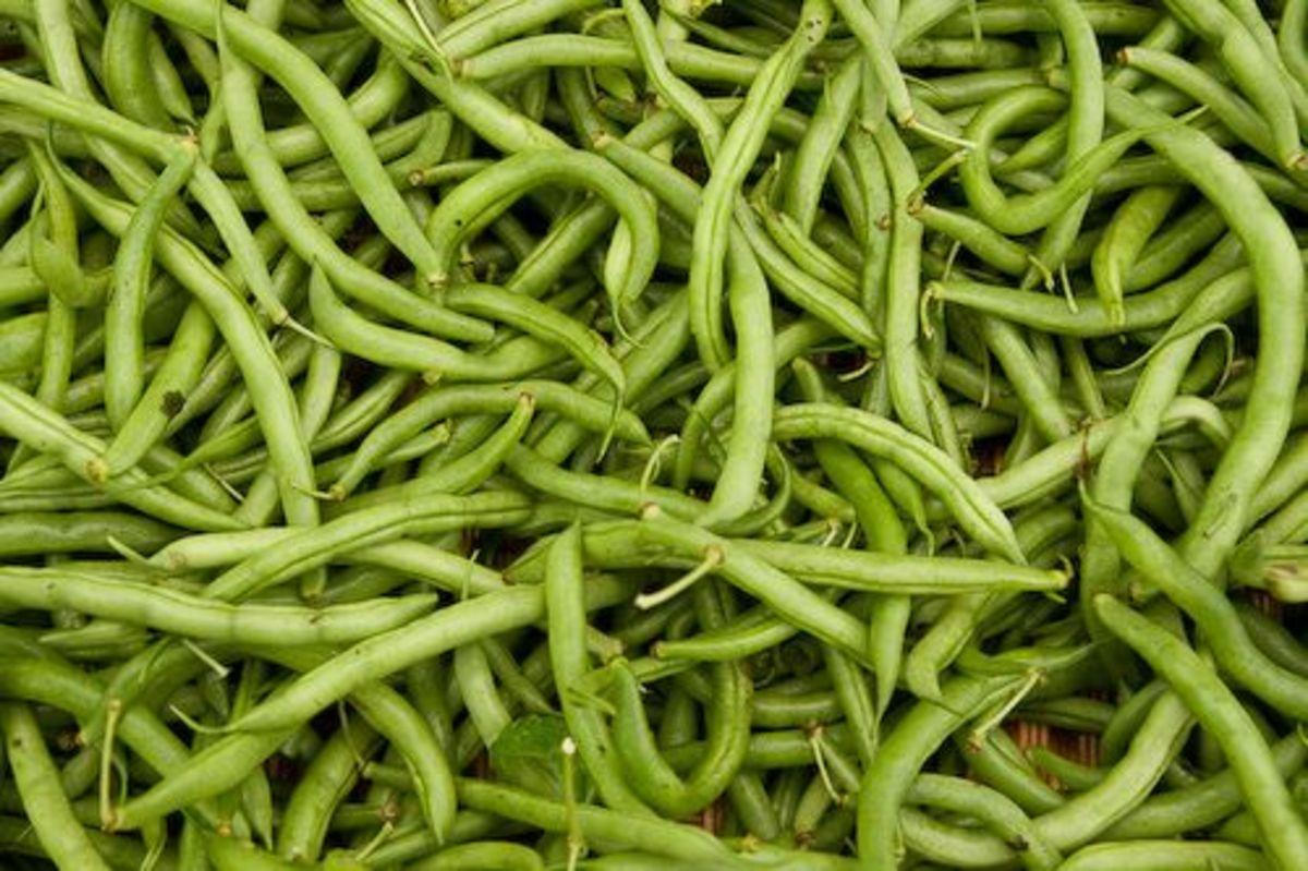 greenbeans-ccflcr-joseibarra