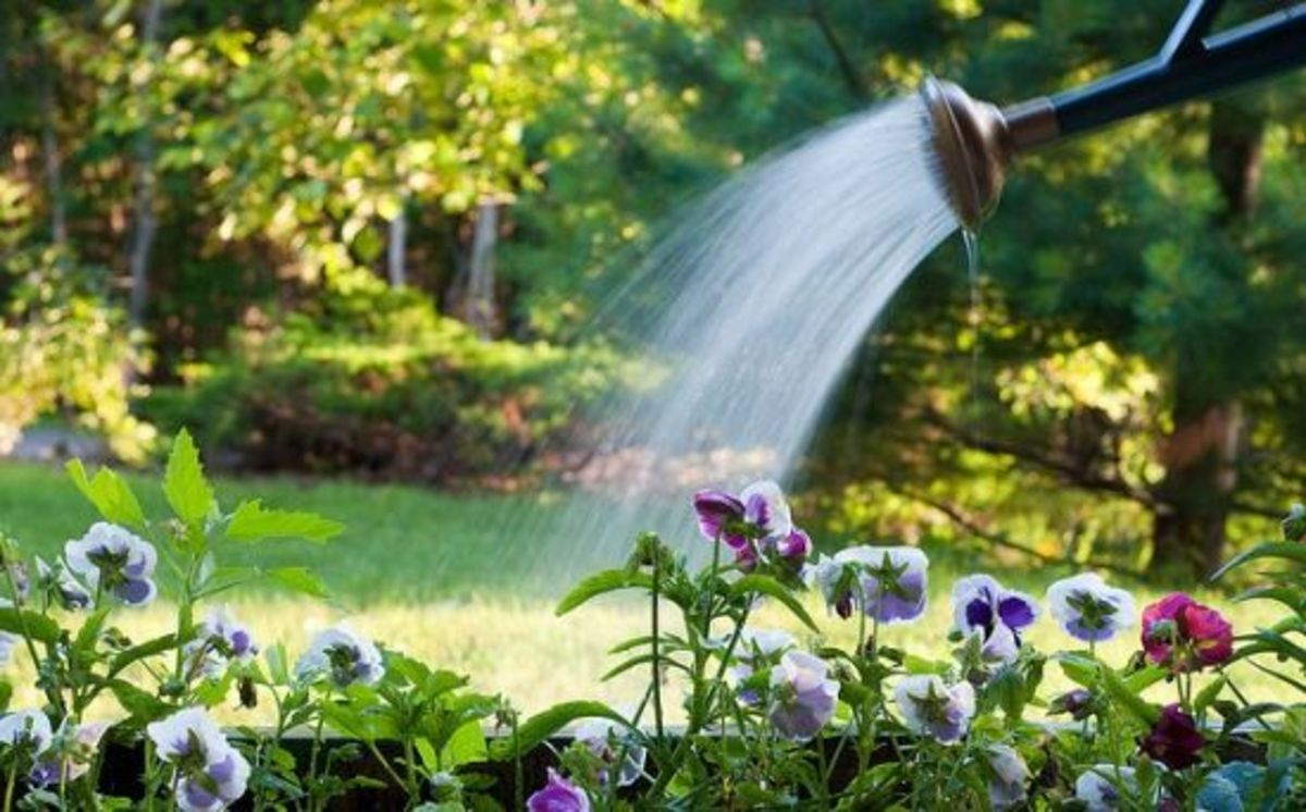 3 Tricks to Conserving Water in Your Organic Garden - Organic Authority