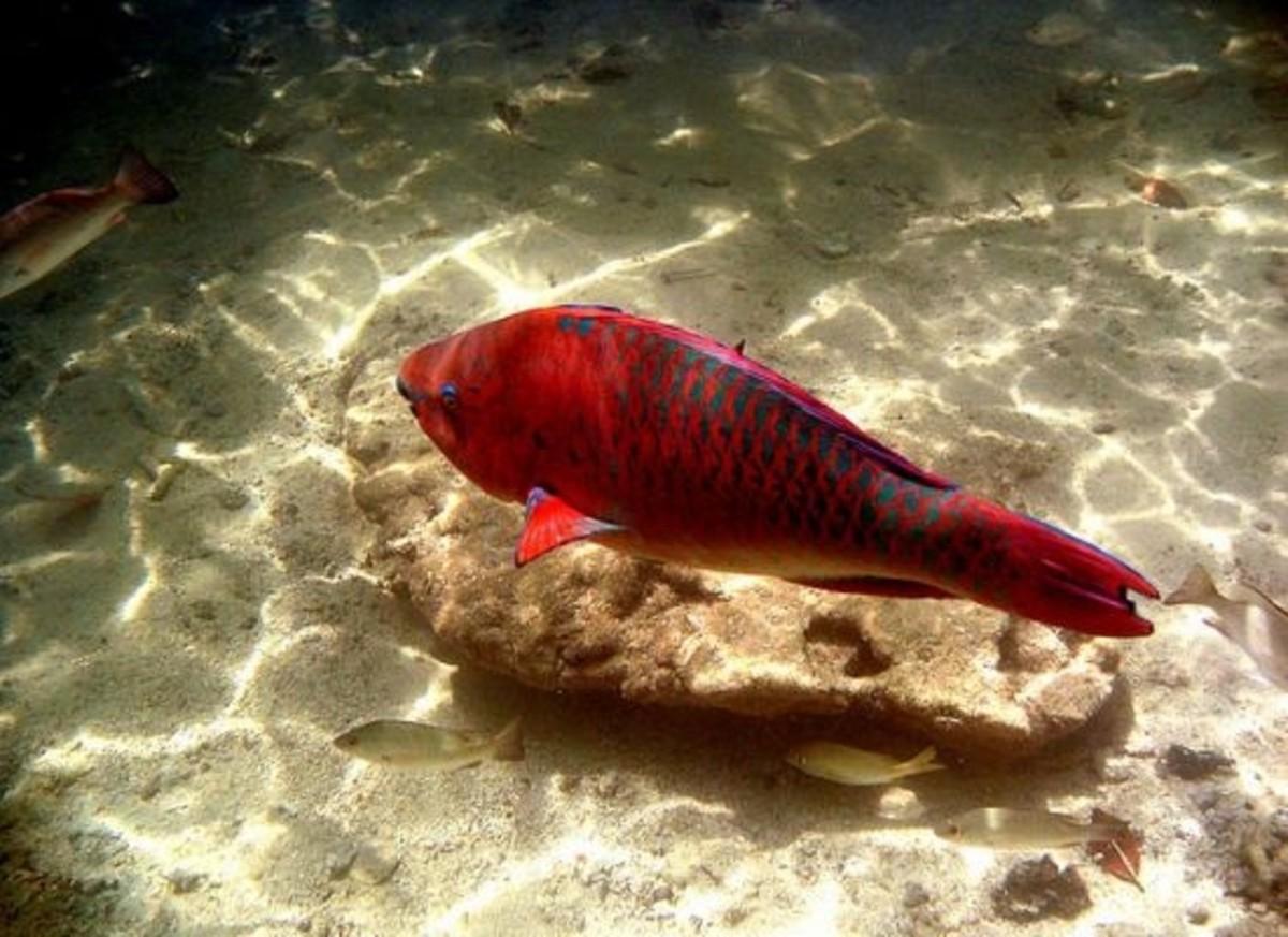 fish-ccflcr-paulbica