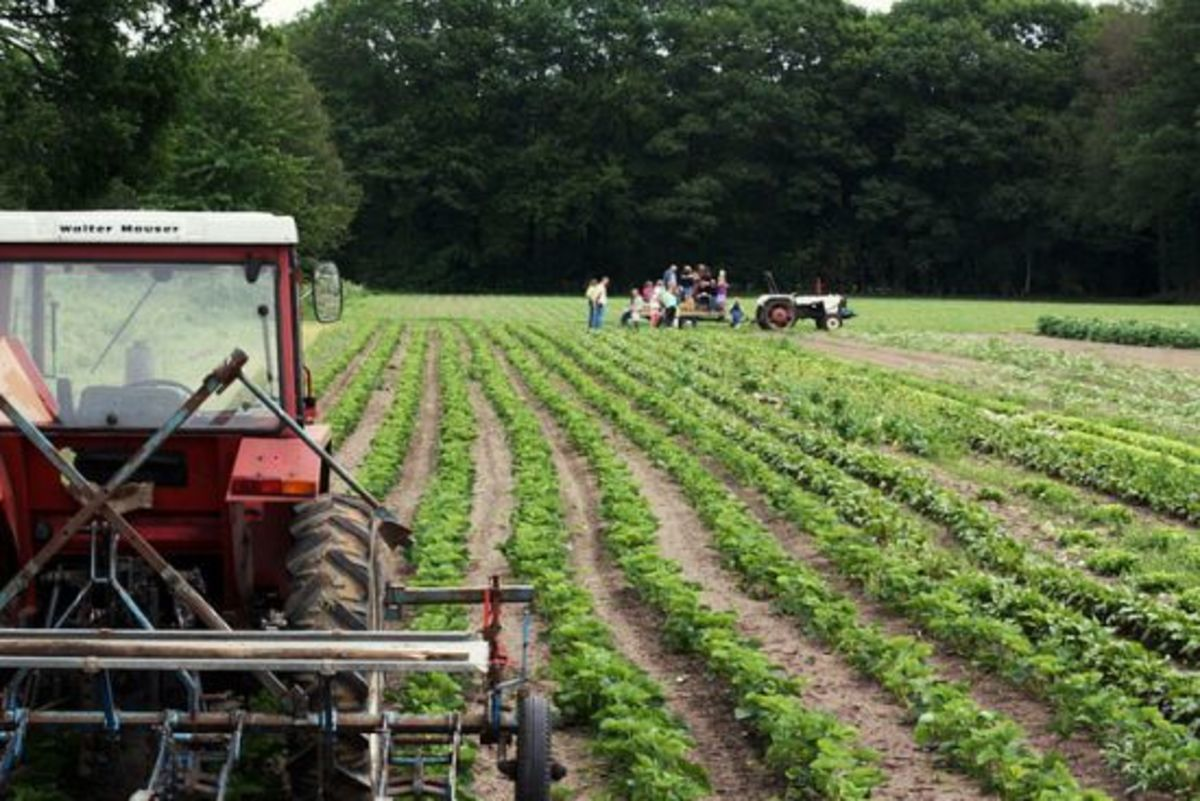 farm-ccflcr-suzettesuzette