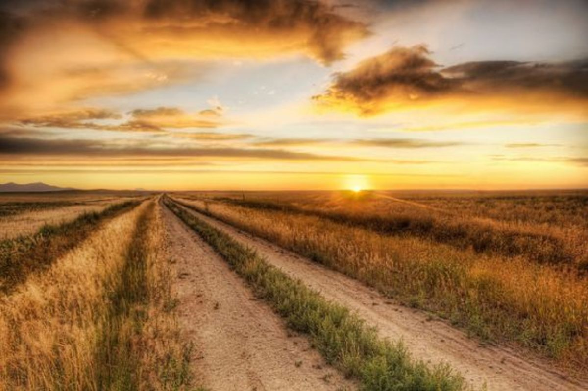 wheatfield-ccflcr-stuckincustoms
