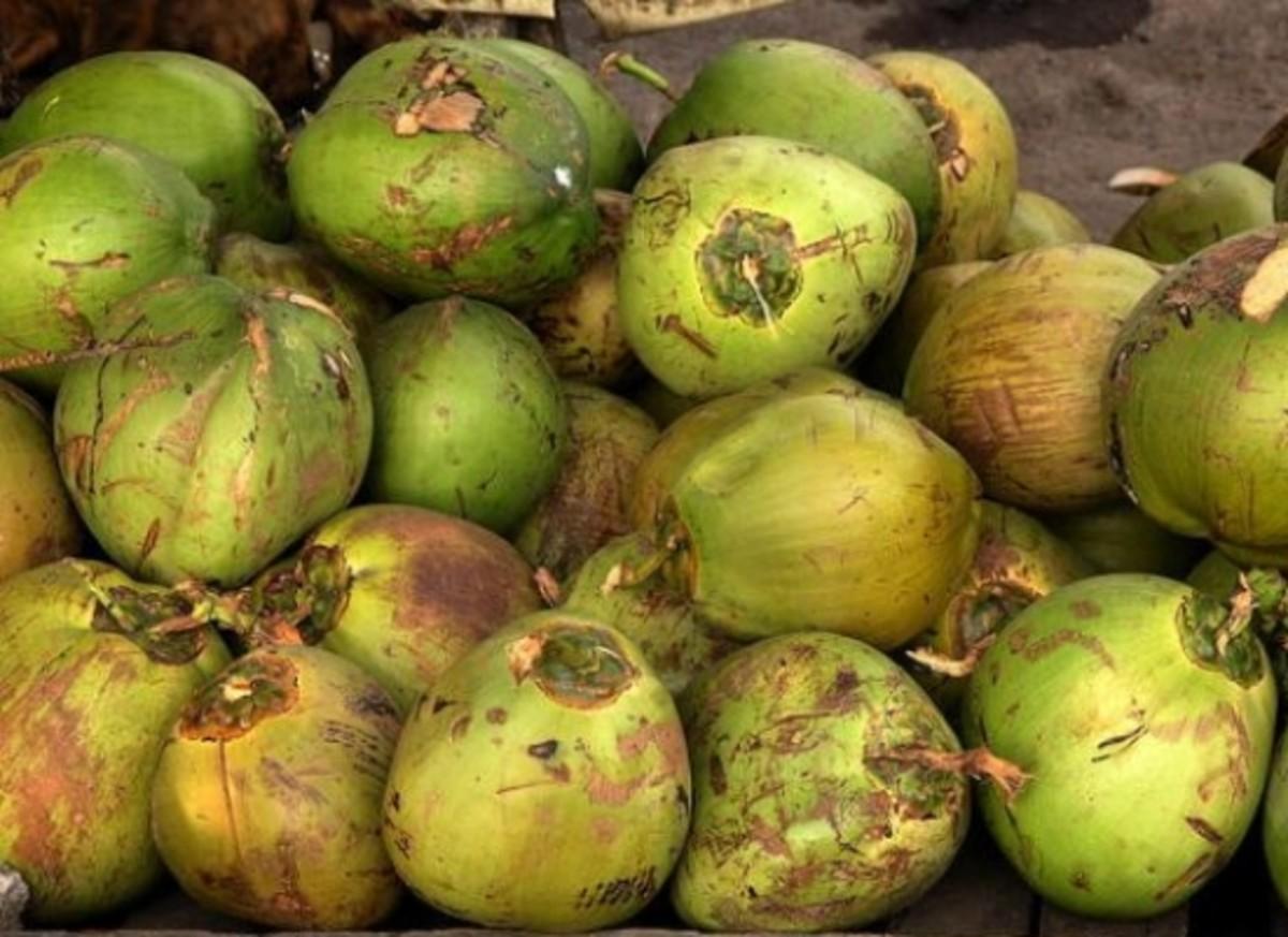 coconuts-ccflcr-Roberto-Verzo