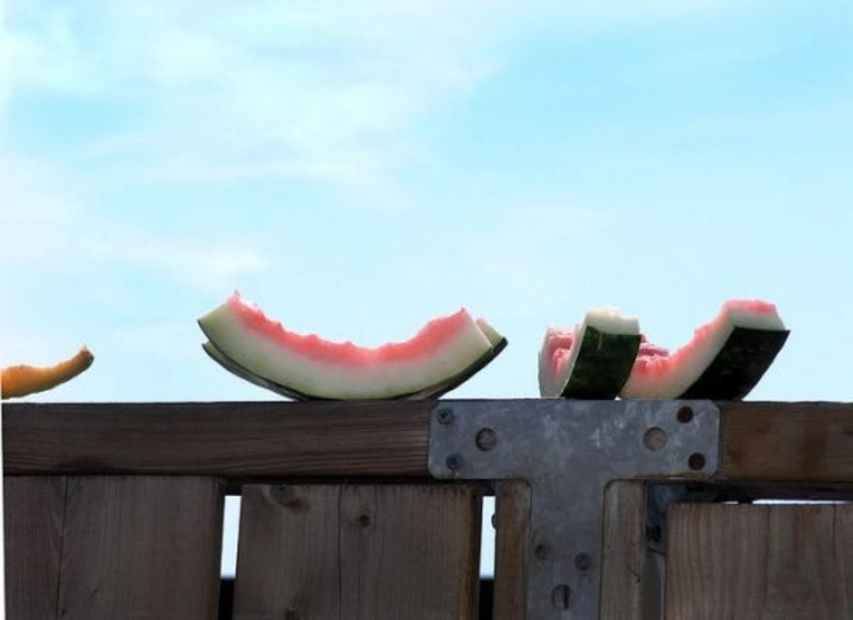 watermelon-ccflcr-dyniss