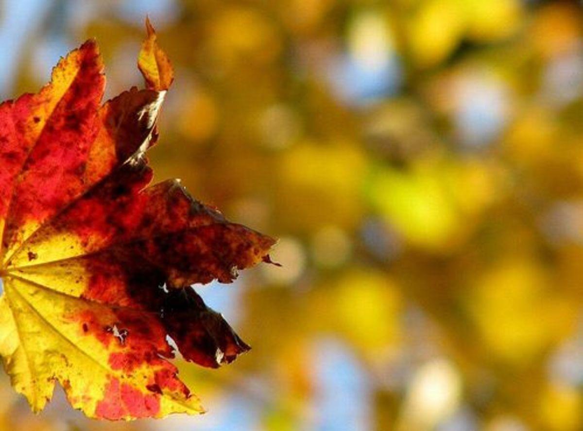 autumn-ccflcr-twoladiestwocats