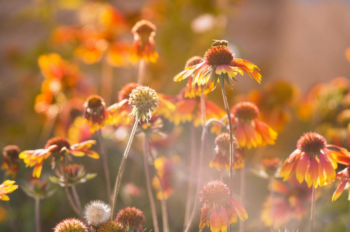 Dangerous Pesticide Found in 75 Percent of Honey Samples