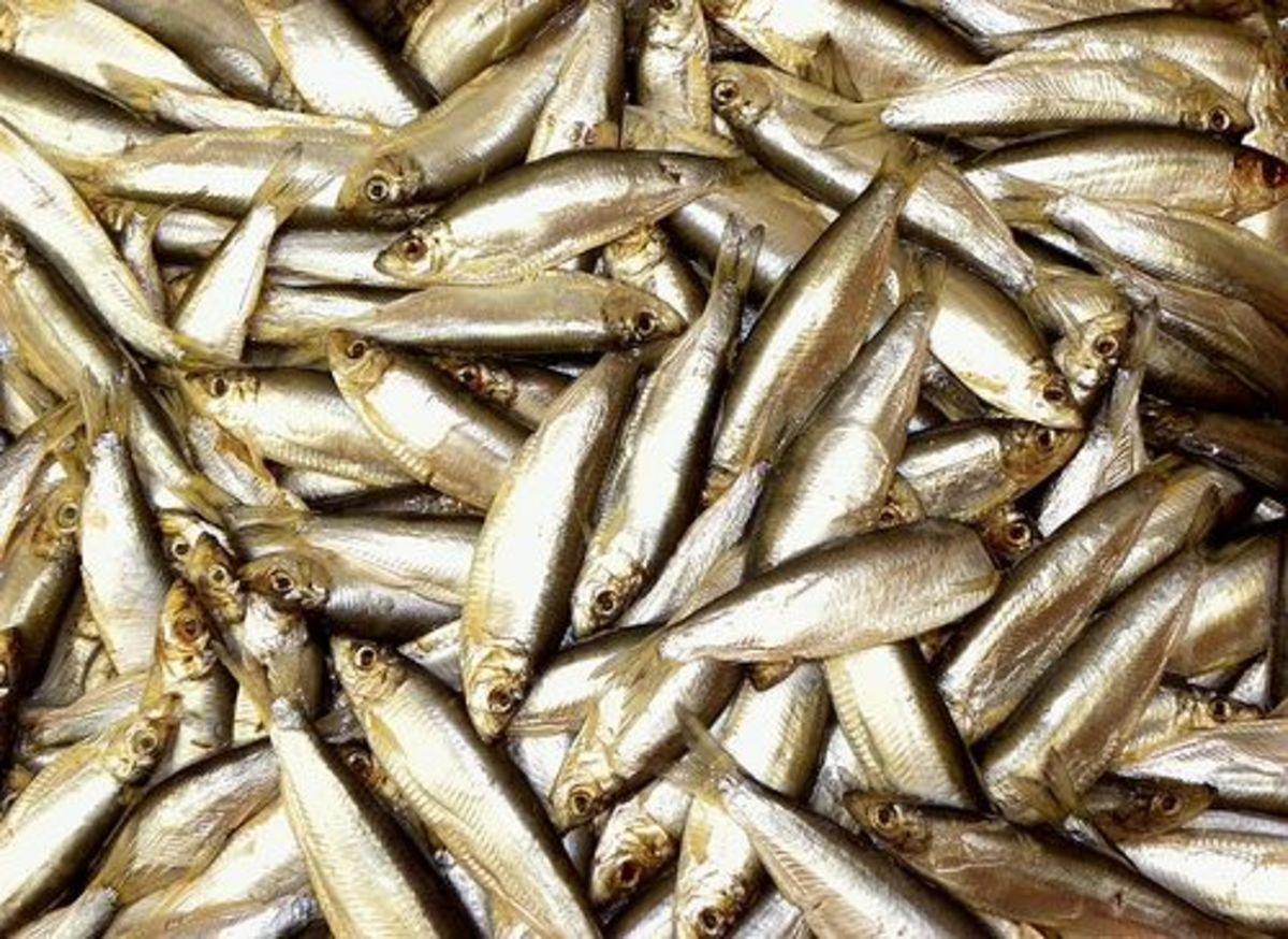 seafood-ccflcr-joost-j-bakker-ijmuiden