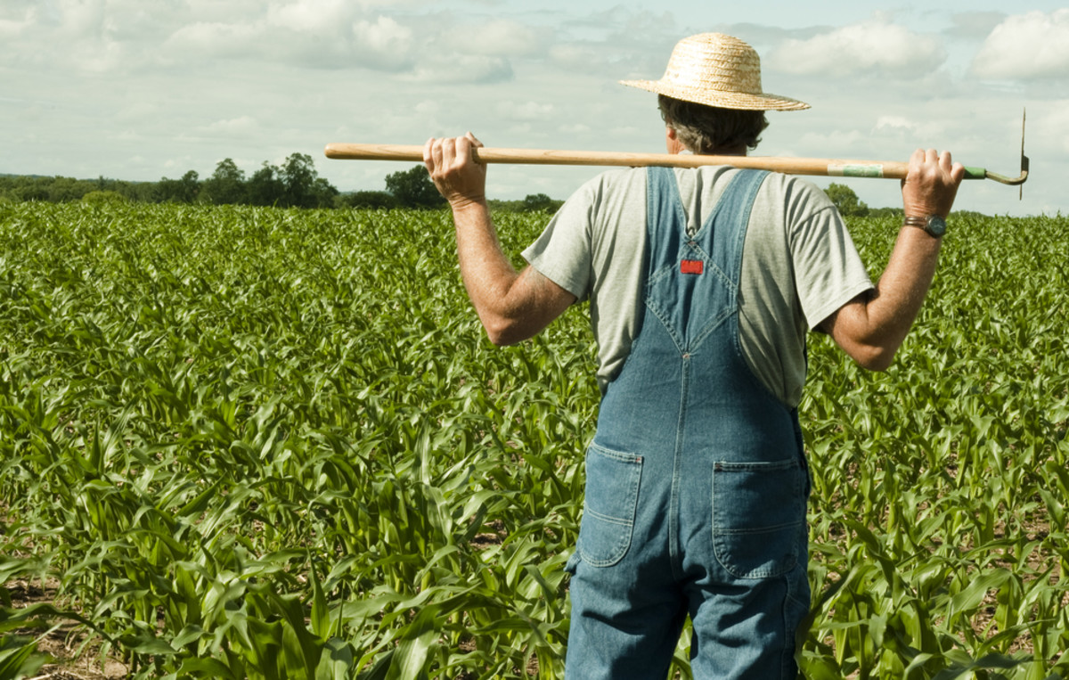 Mass Exodus Expected from Leading Organic Trade Group Over Controversial GMO Legislation