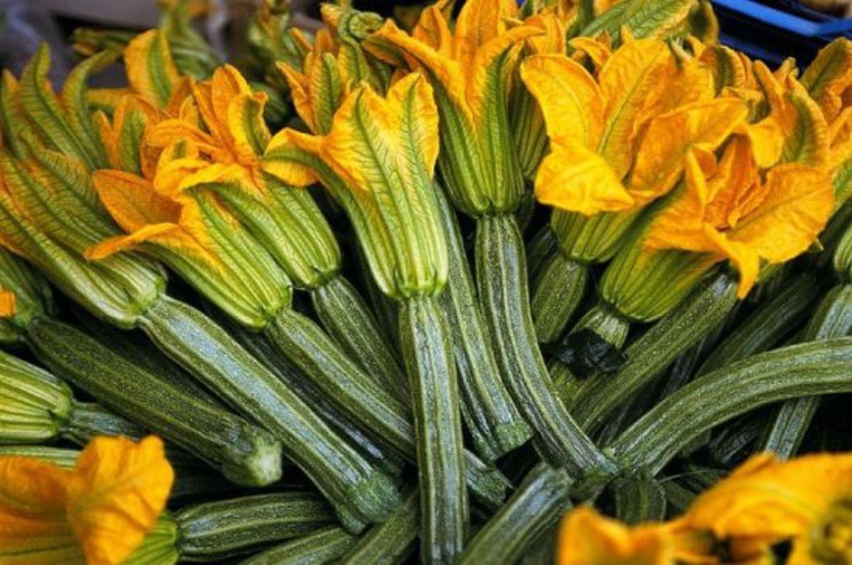 zucchini-ccflcr-ljcybergal