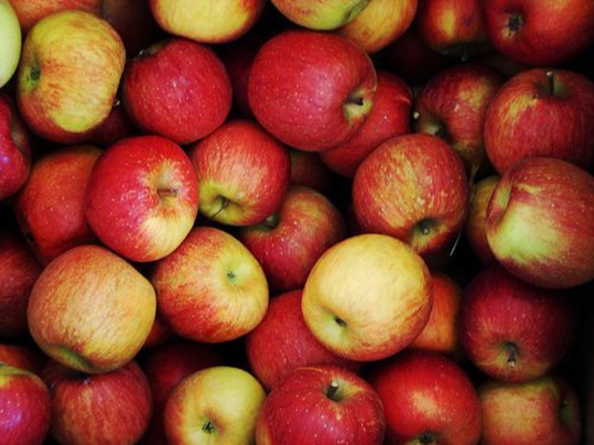 apples-ccflr-jeenna