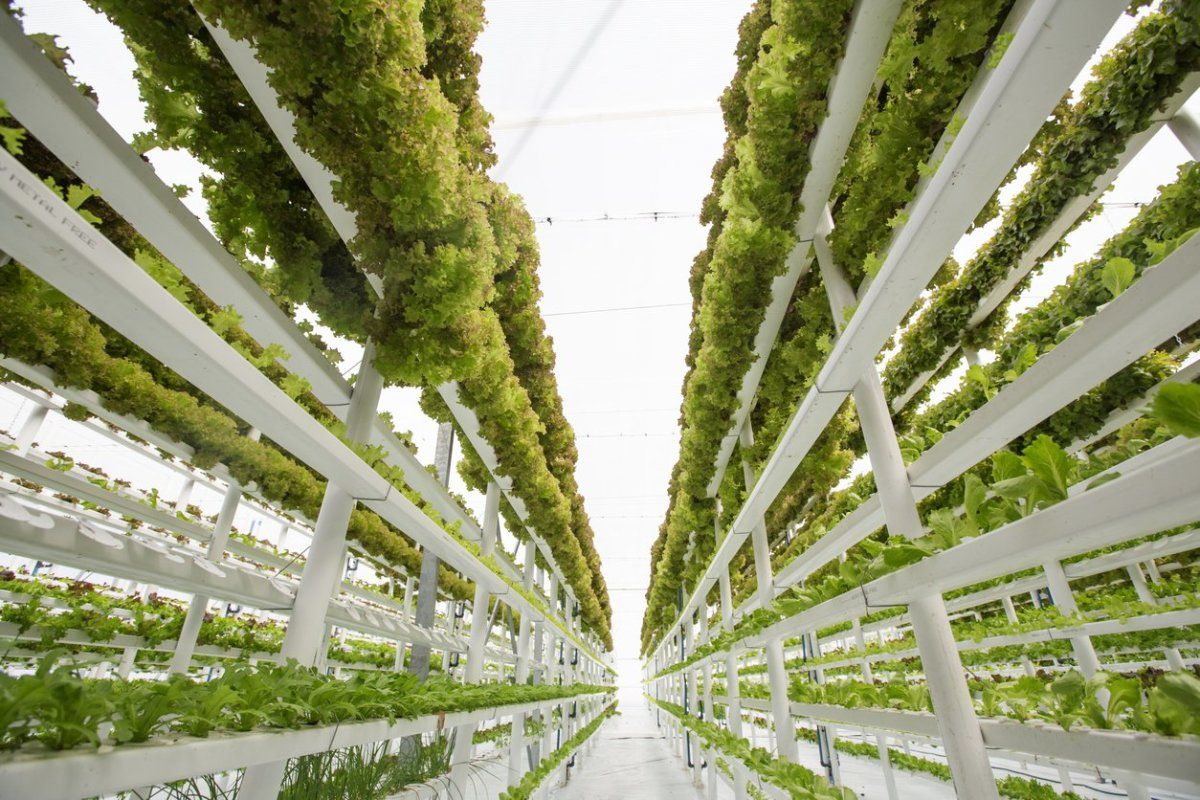 Organic Farmers Lose Battle Over Soilless Hydroponic Growing