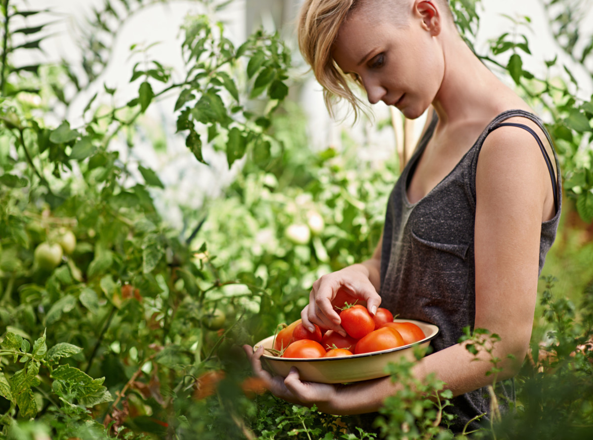 These 7 Common Tomato Plant Problems Can Ruin Your Harvest: Here's How to Troubleshoot