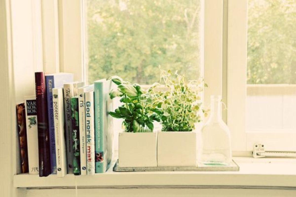 windowgarden-ccflcr-jesspac