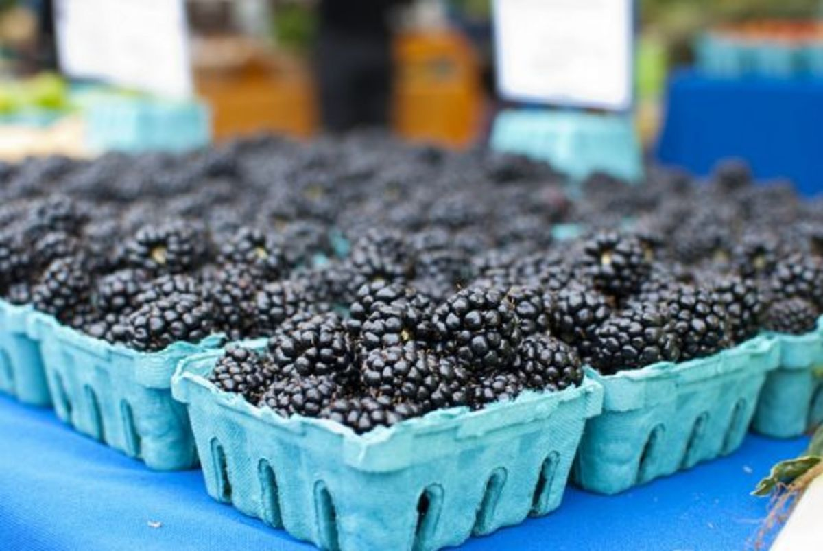 blackberries-ccflcr-wink