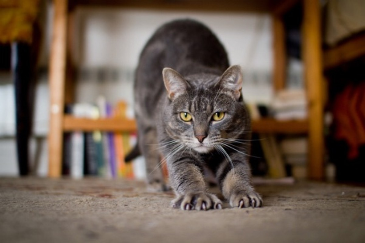 cat stretching