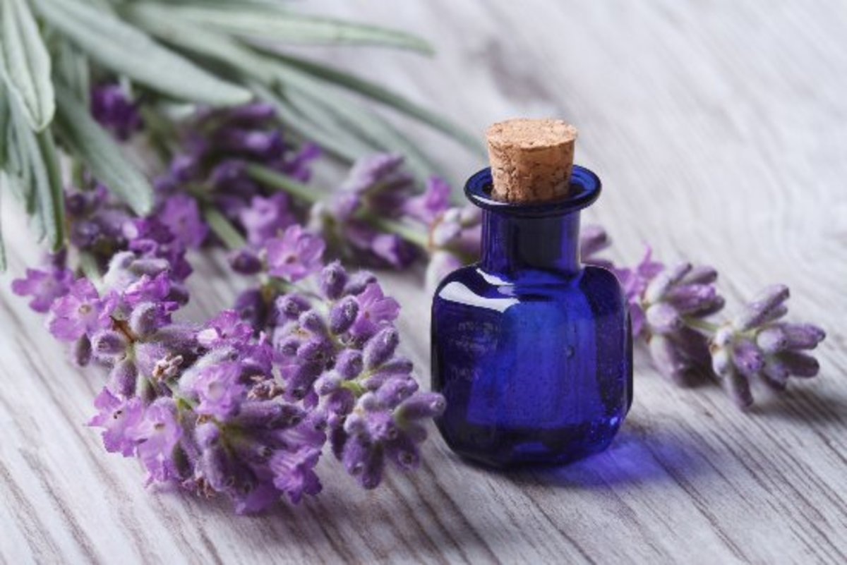 10 Life-Changing Lavender Oil Uses You Need to Know