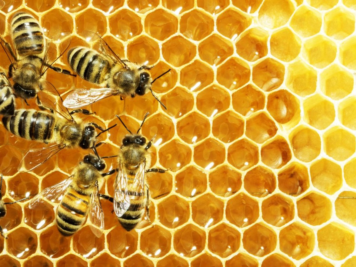 bee death is becoming a more widespread problem