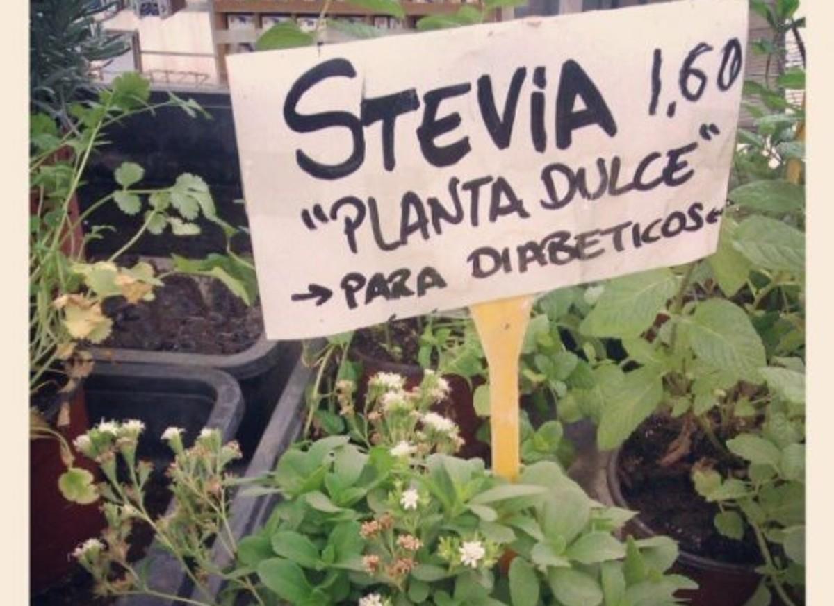 stevia-ccflcr-elgringospain