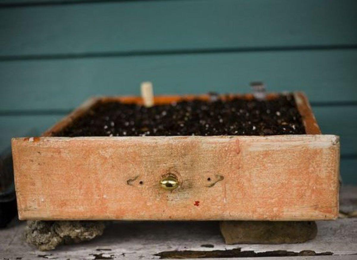 garden-drawer-ccflcr-casey