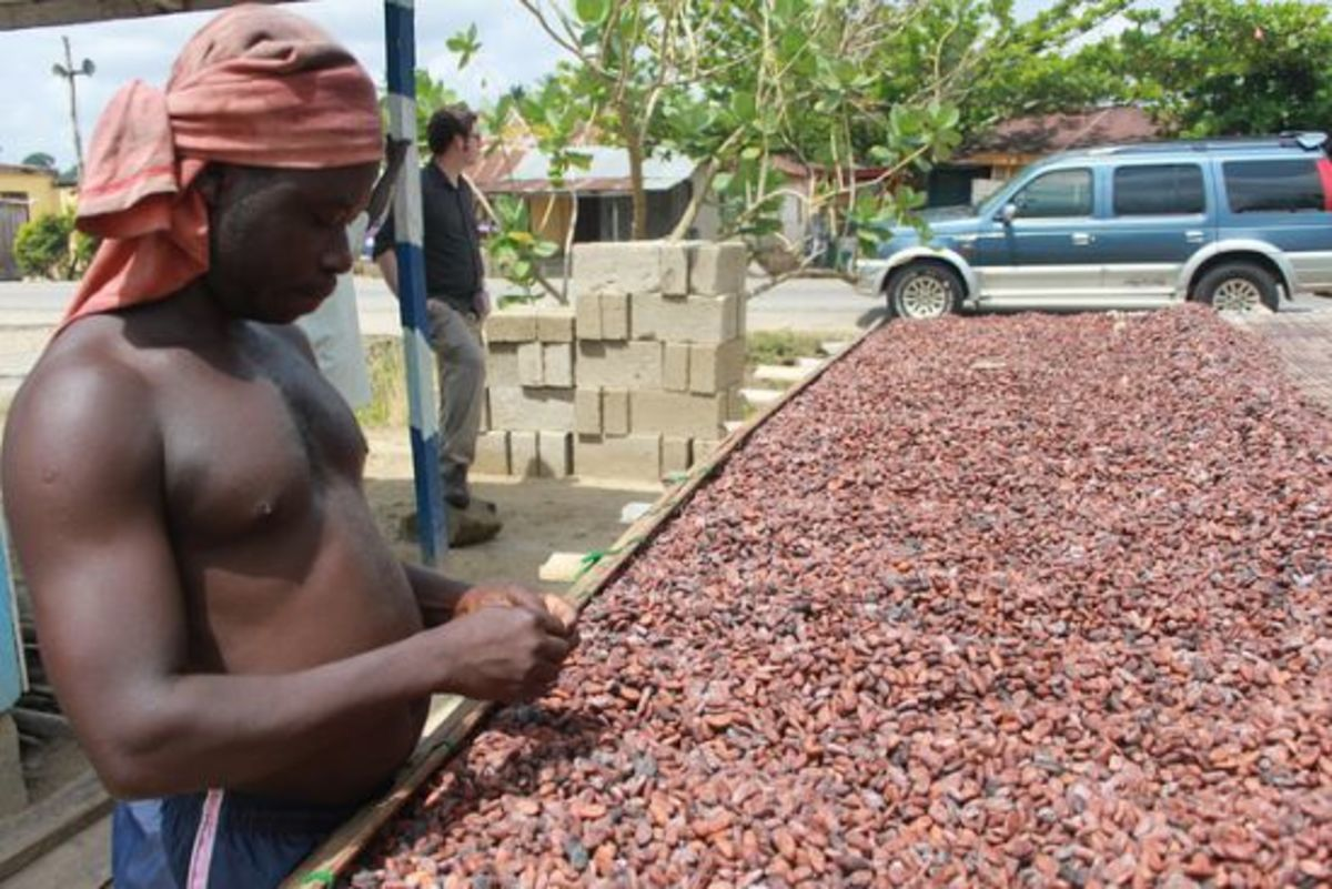 Cacao sorter