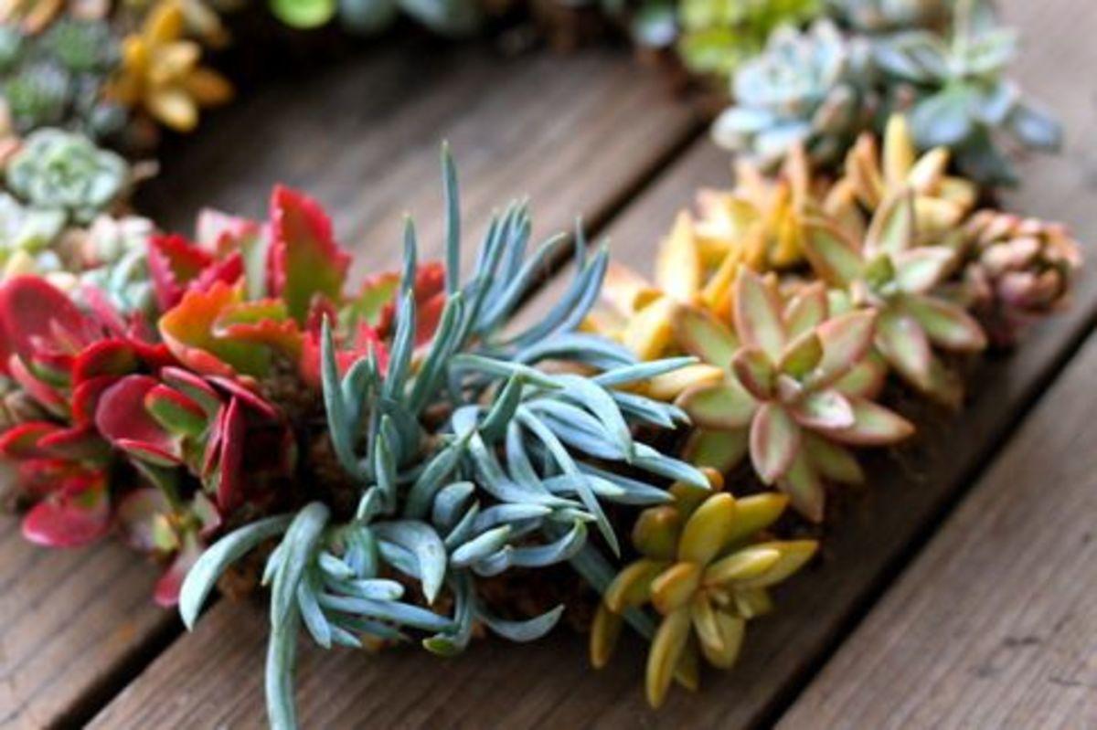 succulent-ccflcr-loveMaegan
