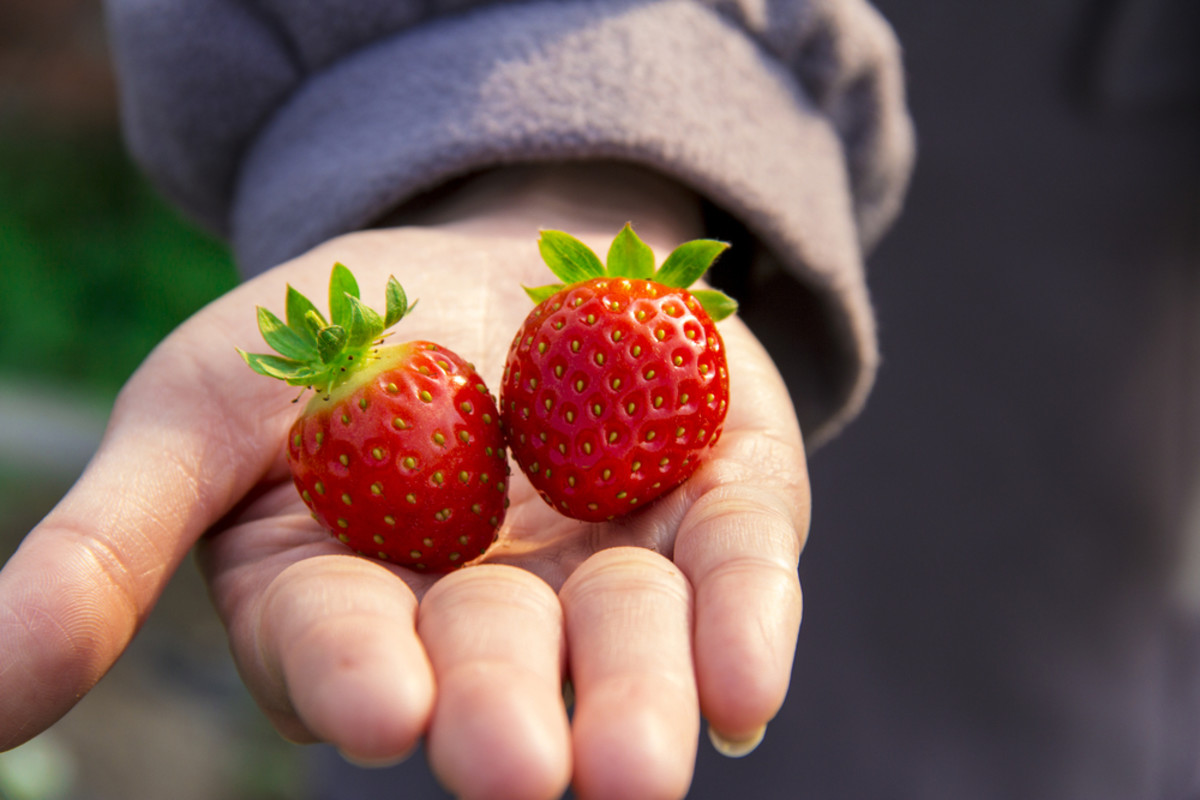 U.S. Boasts a Record Number of Organic Food Producers