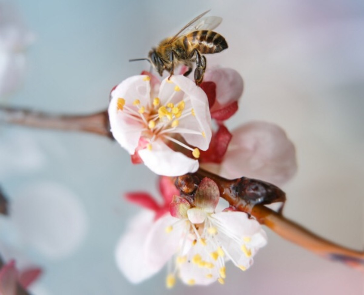 Organic Farming Methods Keep Honey Bees Alive, Report Finds