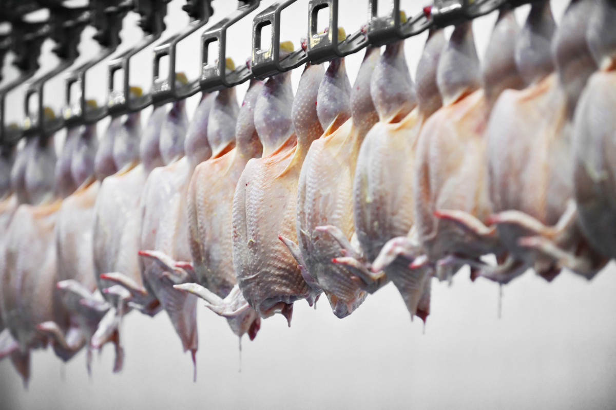 USDA Denies Petition for Unlimited Chicken Slaughter Line Speed