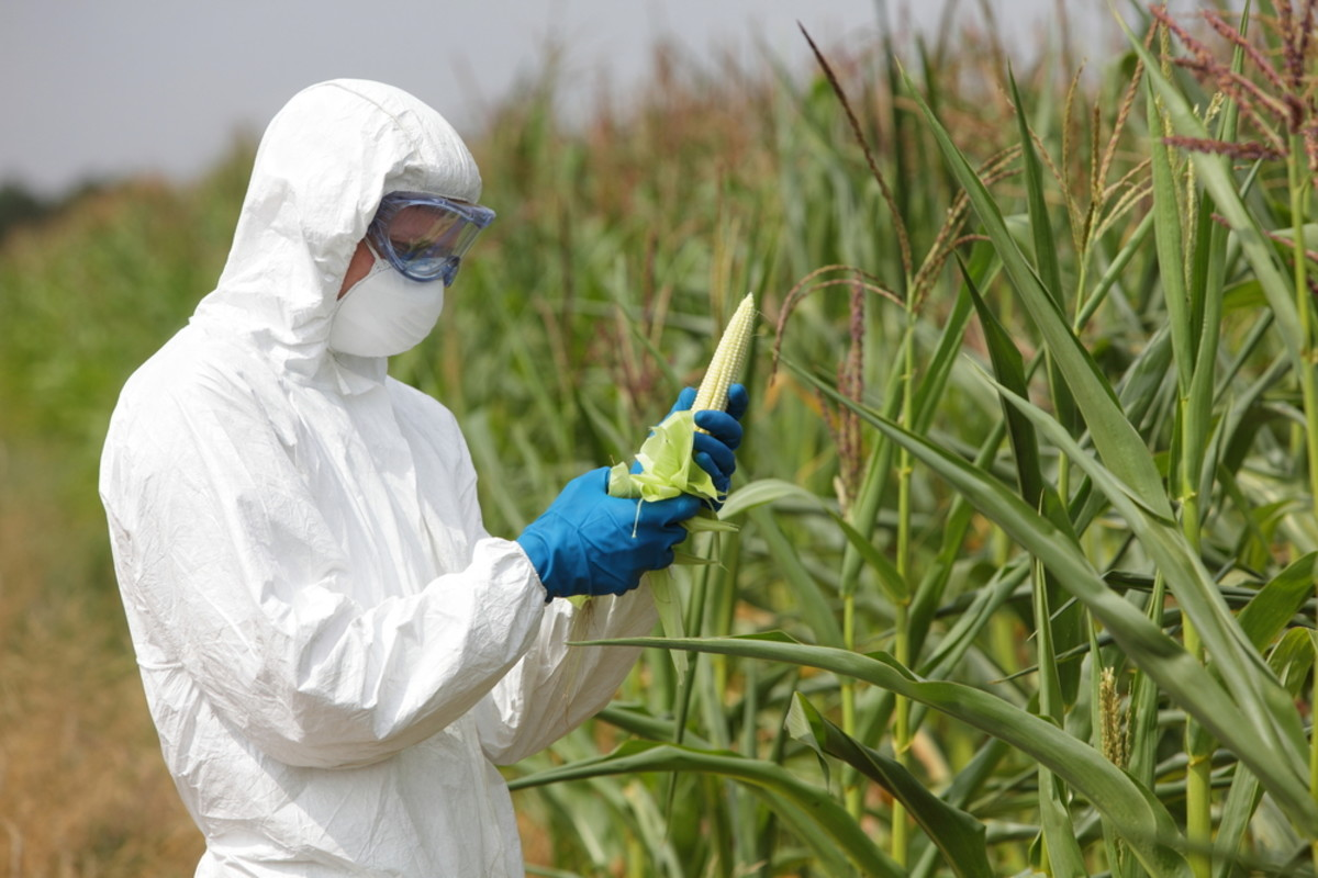 What's the Biggest Issue With GMOs? (Hint: It's Not Exactly ...                    <p><a class=