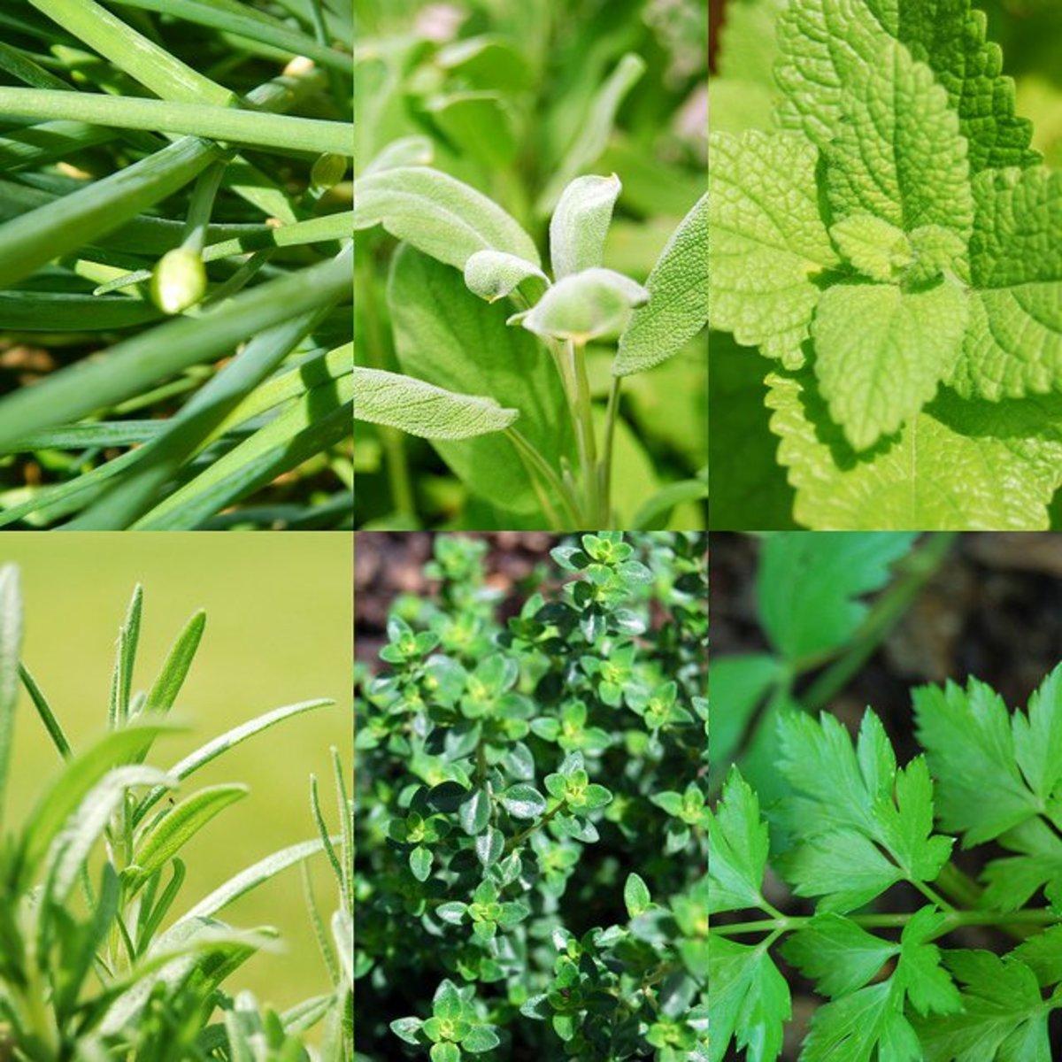 herbs cc