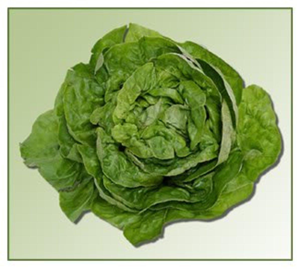 lettuce21
