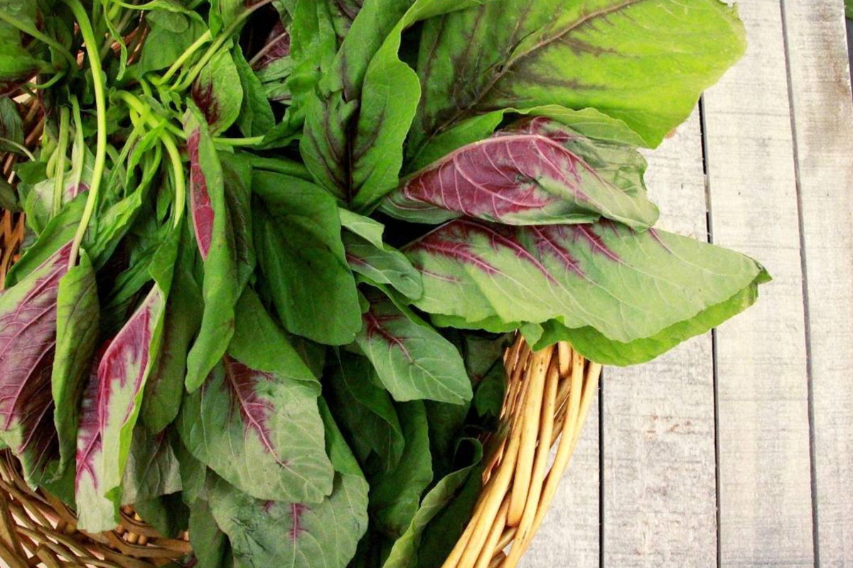 Amaranth Greens are the New Kale