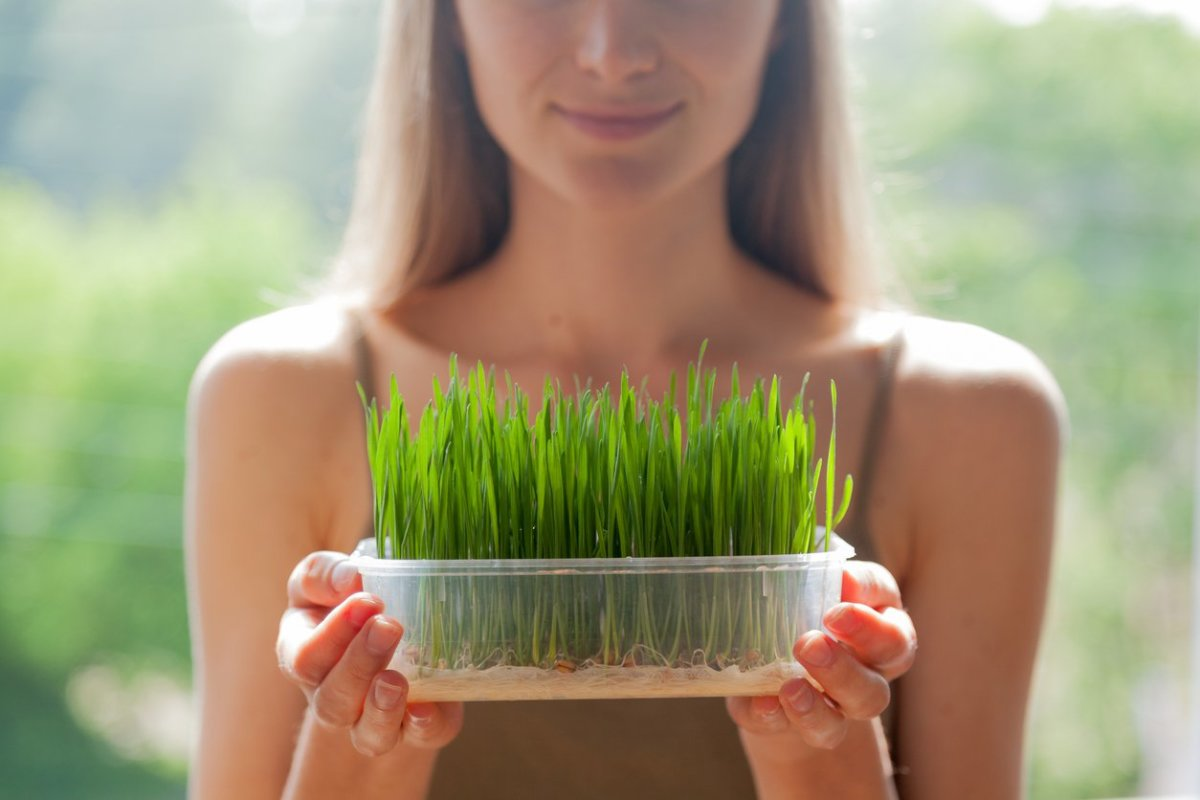 35 Amazing Wheatgrass Benefits for Health, Hair and Beauty (Backed by Science!)