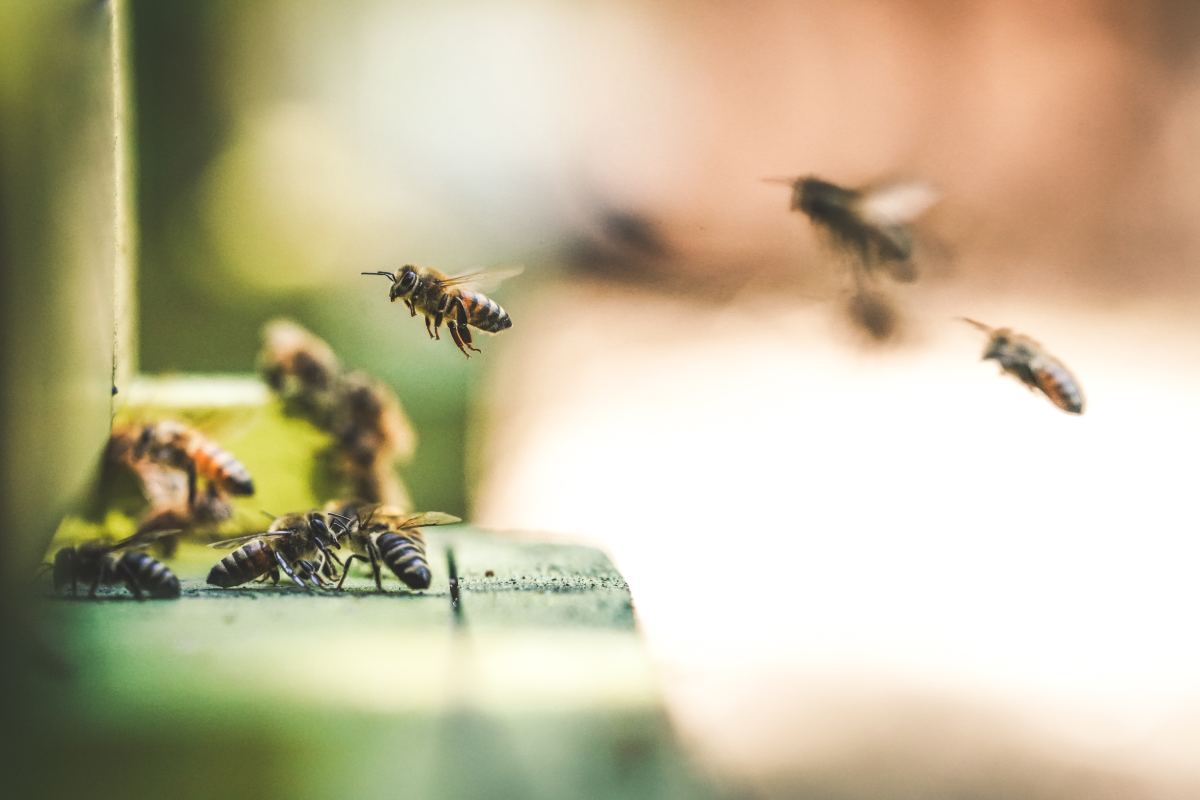 Neonicotinoid Pesticides Impair Bees' Social Behavior, New Study Shows