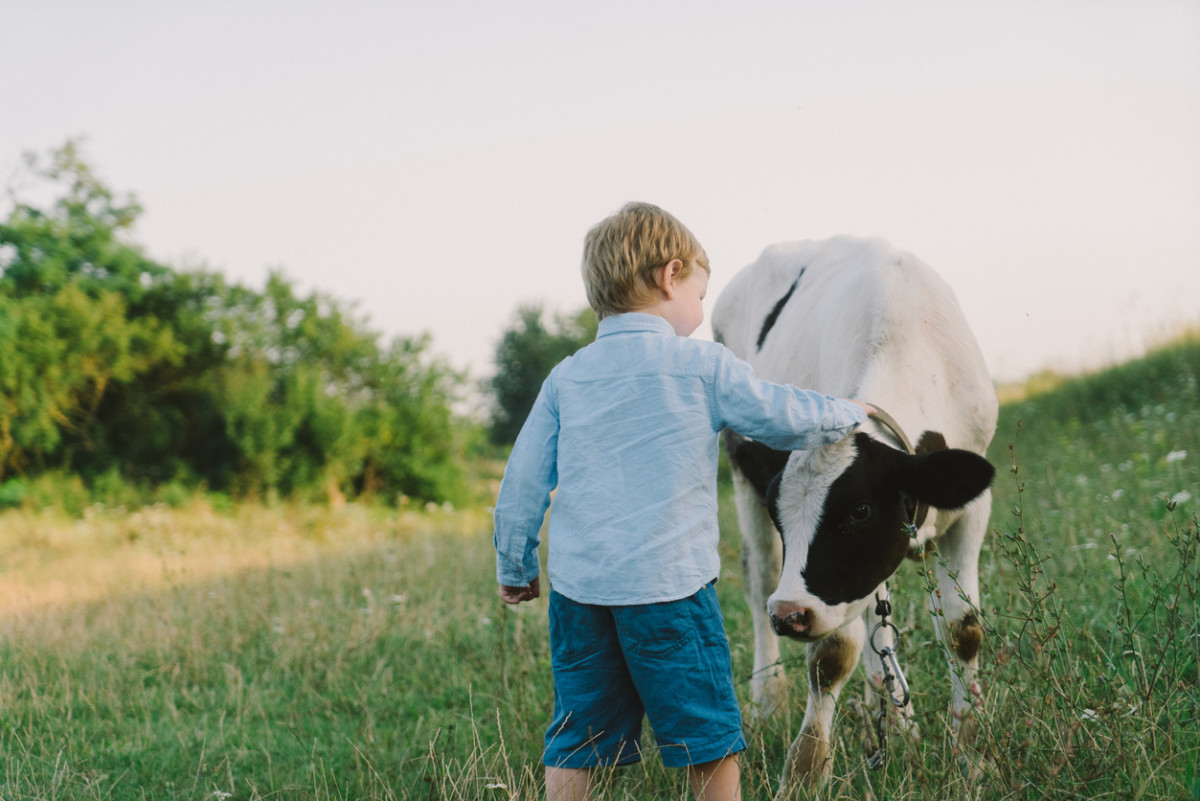Could a Cow Hug Be the Cure for Everything?