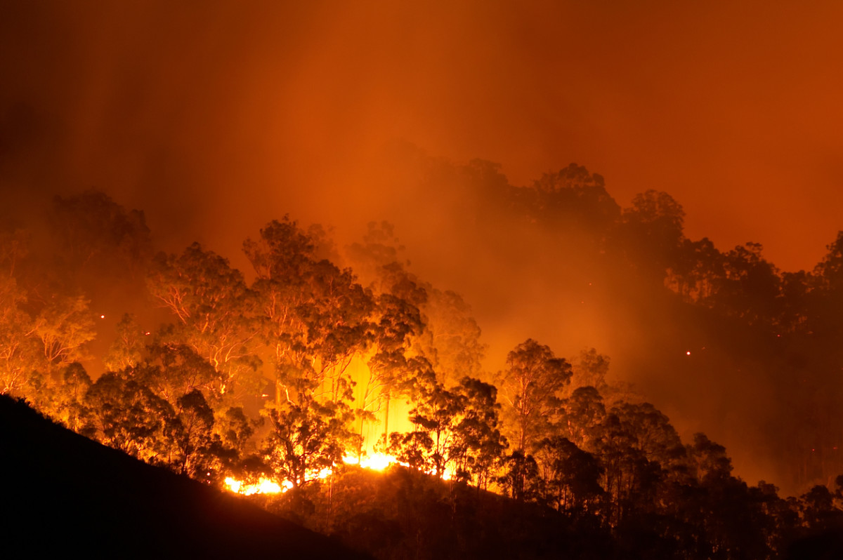 5 Things You Need to Know About the Amazon Rainforest Fires