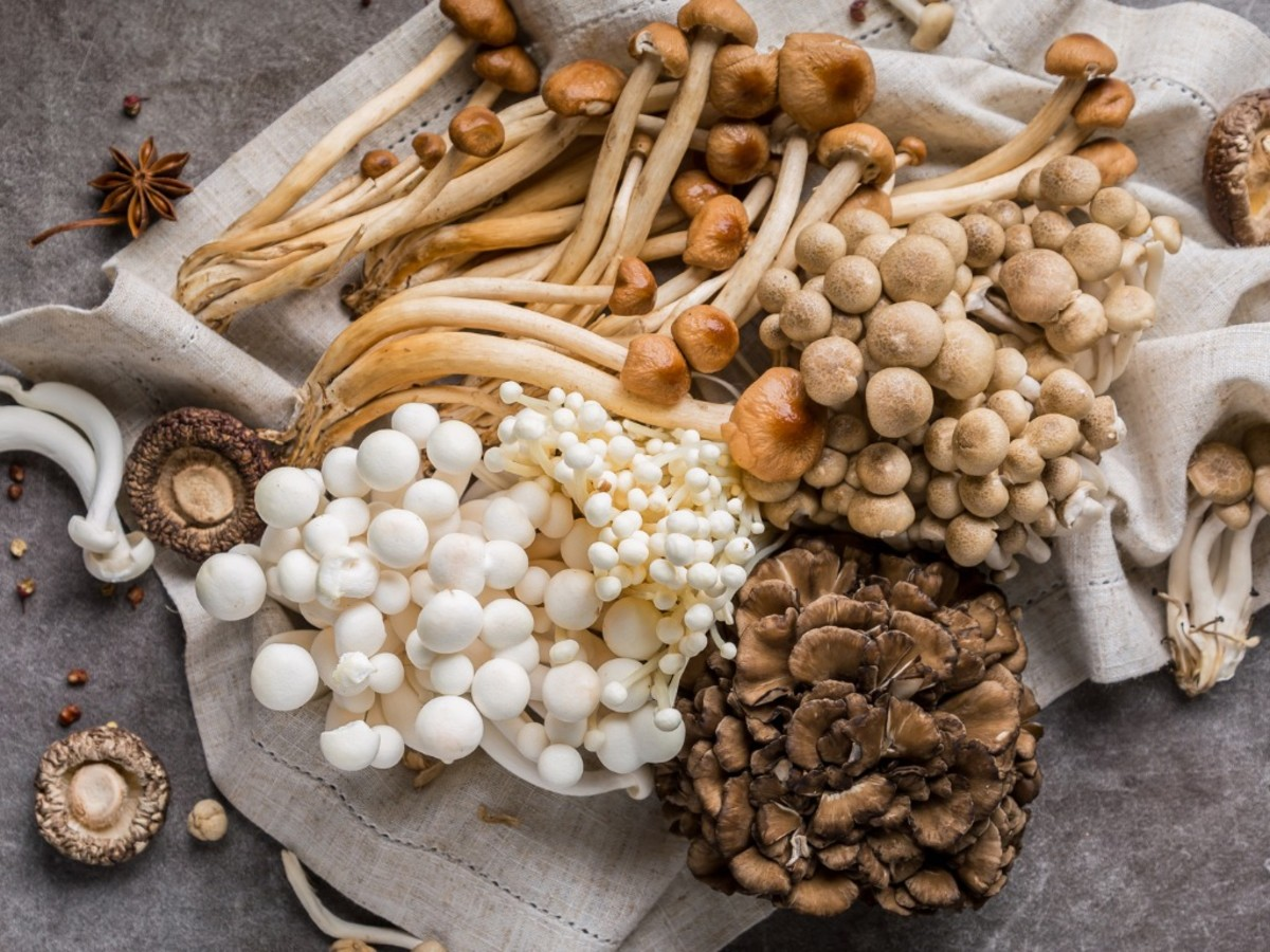 study: mushrooms might reduce brain decline