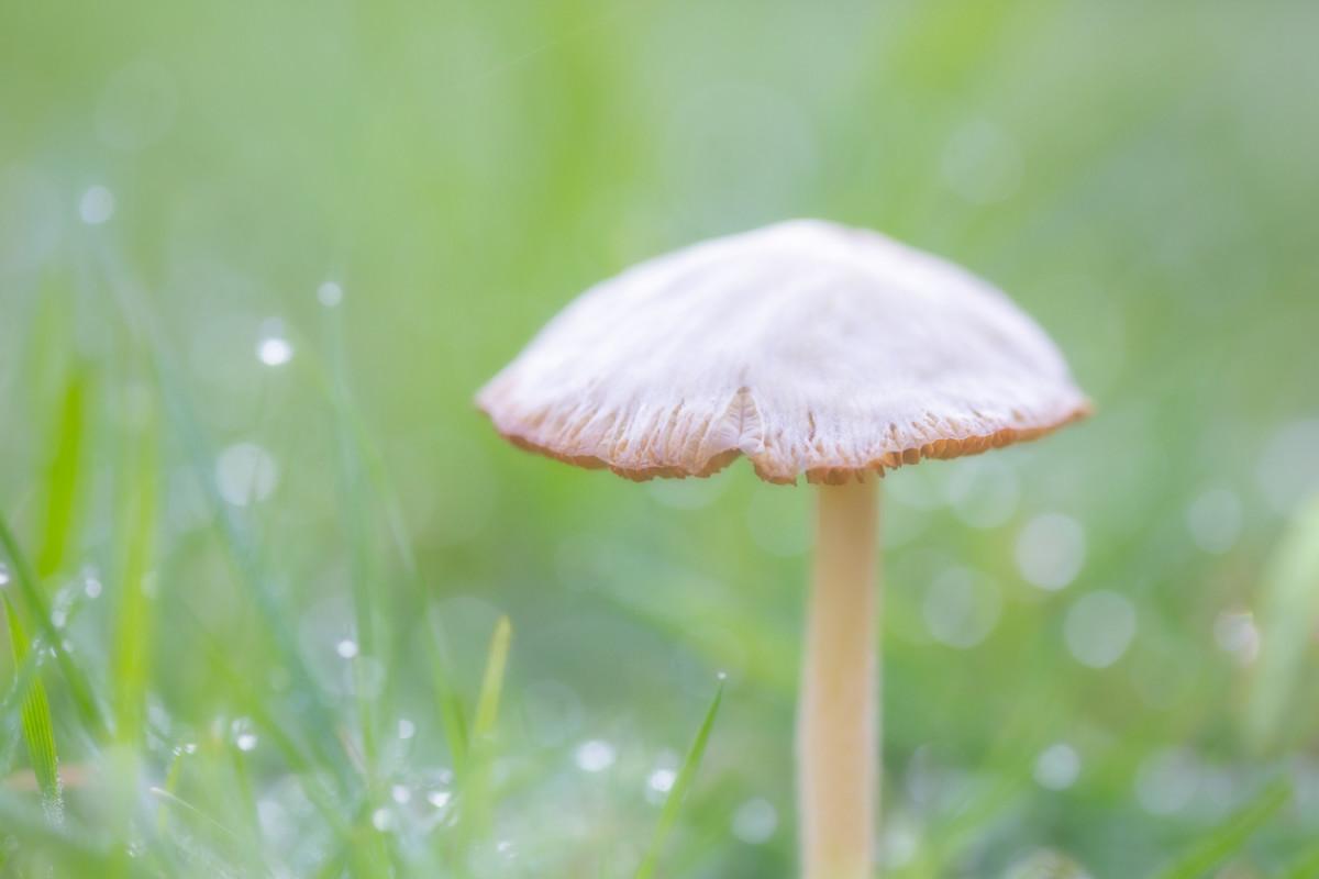 Denver Decriminalizes Psychedelic Mushrooms