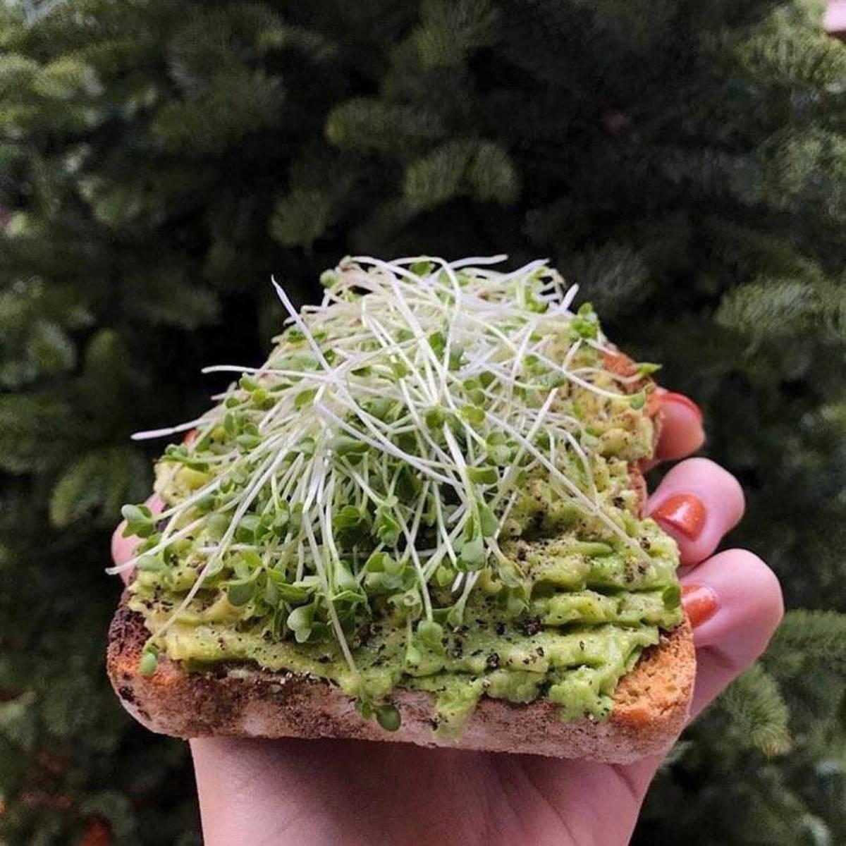 4 Grow Your Own Garden Kits to Make Quarantine Gardening Easy